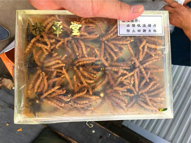 冬虫夏草回收案例